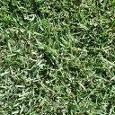 【種 1kg】 SHGノシバ 野芝 芝生用 緑化用 植物 緑肥 雪印種苗 米3【代引不可】