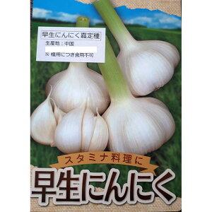 500g 栽培用 早生ニンニク 嘉定種 中国産 リン片 にんにく 球根 種用 米S 代引不可