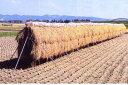 【大型配送】稲干台 はざ 4段掛け 鉄製 稲架(はさ、はざ、はせ、はぜ、はで)掛け シNZ