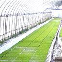 納期2週間程度 丈夫で長持ち 育苗用 プールシート 厚さ0.26mm×幅 270cm ×長さ 20m プール育苗 シート オK 代引不可