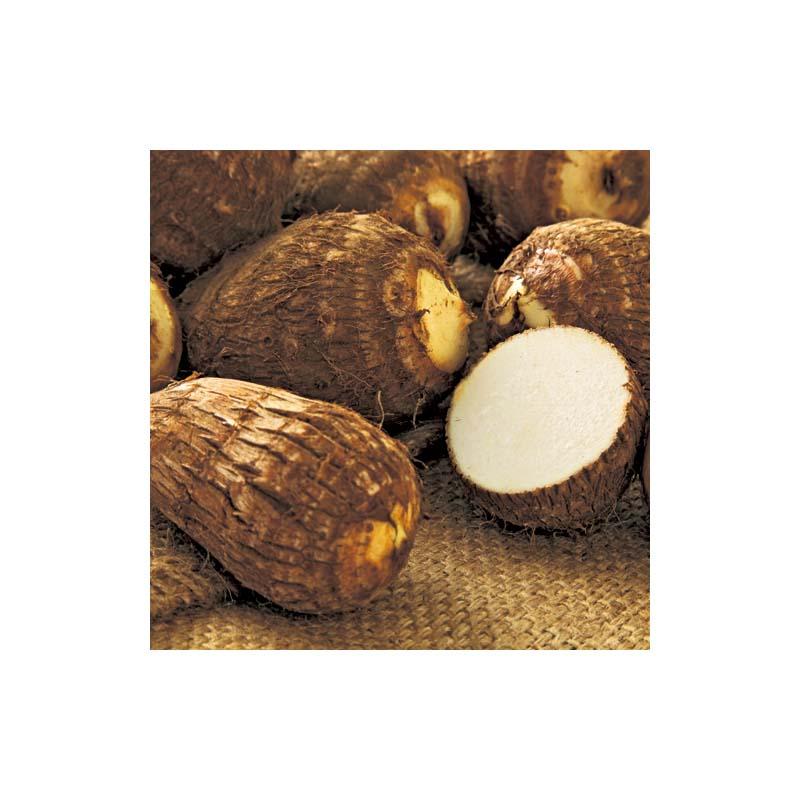 在庫限り [20kg] さといも 土垂れ 里芋 栽培用 タネイモ 種芋 家庭菜園 栽培用 米S 代引不可