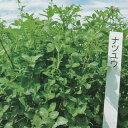 【種 0.5kg】 あかクローバー ナツユウ 豆科牧草 [秋まき主体] 酪農 畜産 緑肥 牧草 タキイ種苗 米S 【送料無料】 【…