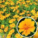 【種 200g】 フレンチマリーゴールド グランドコントロール 緑肥作物 [春まき主体] 景観用 タキイ種苗 米S 【送料無料…