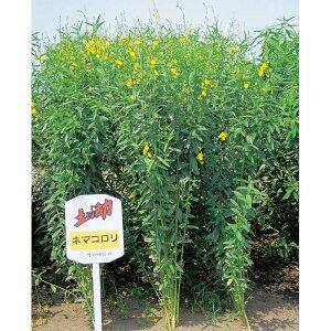 種 10kg クロタラリア ネマコロリ 畑地 線虫対策 緑肥 播種期:2〜9月 雪印種苗 米S 送料無料 代引不可