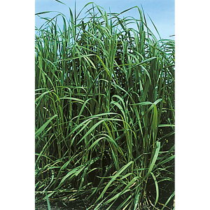 種 10kg チモシー クライマックス 中生 畑地 牧草 緑肥 播種期:4〜10月 雪印種苗 米S 送料無料 代引不可