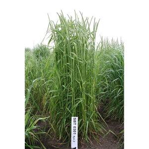 種 5kg チモシー ユウセイ 極早生 畑地 牧草 緑肥 播種期:4〜10月 雪印種苗 米S 代引不可