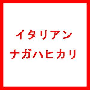 種 10kg イタリアンライグラス ナガハヒカリ 中生 酪農 畜産 播種期:9〜11月 雪印種苗 米S 送料無料 代引不可
