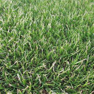 種 10kg ペレニアルライグラス リン 芝 緑化用 播種期:3〜10月 雪印種苗 米S 送料無料 代引不可