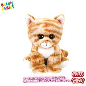 【TY】 ぬいぐるみ 【BEANIE BABIES】 CLEO クレオ ビーニーベイビーズ 猫 ねこ ネコ チャトラ Sサイズ 15cm