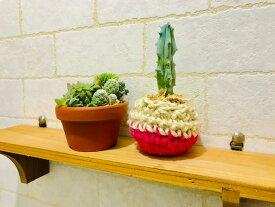 多肉植物の寄せ植え ポットセット 当店オリジナル(素焼き平鉢+ニットポット赤)素焼き平鉢 高さ4.0cm、幅6.0cm、ニットポット高さ4.0cm、幅5.0cm 多肉植物、サボテン、セダム類の寄せ植え。