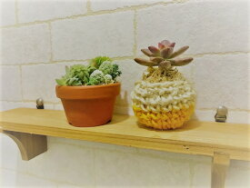 多肉植物の寄せ植え ポットセット 当店オリジナル(素焼き平鉢+ニットポット黄)素焼き平鉢 高さ4.0cm、幅6.0cm、ニットポット高さ4.0cm、幅5.0cm 多肉植物、サボテン、セダム類の寄せ植え。