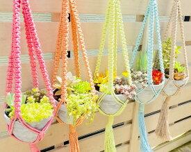 多肉植物、サボテン、セダム類の管理が少ない寄せ植えセットオシャレで可愛い手編みハンギングバスケット(カラーは5色から選べます) 素焼き鉢 高さ約10.5cm 直径約13.5cm当店オリジナルの手編みハンギング(プラントハンガー)はマクラメ編み。
