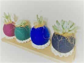 ギフトボックス 多肉植物の寄せ植え 羊毛苔玉4個ダークカラーセット(青、深緑、ラズベリー、黒) 当店オリジナル 高さ約8.0cm、幅約8.0cm 多肉植物、サボテン、セダム類の寄せ植え。