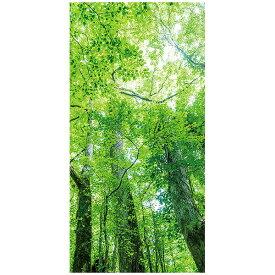木漏れ日若葉タペストリー(防炎加工)|壁掛け装飾(デコレーション)【高画質】