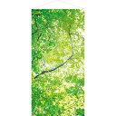 森・自然・木々・木漏れ日タペストリー   新緑若葉タペストリー(防炎加工)