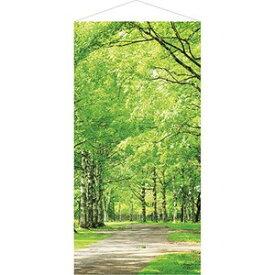 白樺並木タペストリー(防炎加工) 春デコレーション タペストリー  TC8-0019 テトロンポンジ H180×W90cm