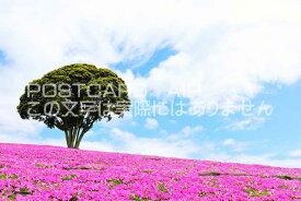 【日本のポストカードAIR】千葉県 マザー牧場のペチュニアの風景のはがきハガキ葉書 撮影/YOSHIO IWASAWA