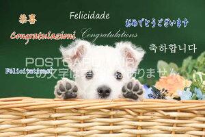 【言葉で伝えるポストカードAIR】「ありがとう」を韓国語・フランス語・英語・中国語・などで