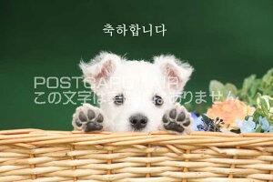 【言葉で伝えるポストカードAIR】「ありがとう」を韓国語の葉書はがきハガキ