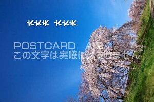 【励まし気持ちを伝える文字入りポストカードのAIR】「大丈夫 大丈夫」桜のポストカードハガキpostcard-photo by 絶景.com