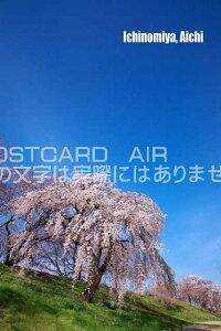 【日本の観光地ポストカードのAIR】「Ichinomiya, Aichi」美しい桜のはがき・葉書・ハガキphoto by 絶景.com