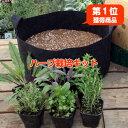 【初回購入1,000円OFF】ハーブ 苗 セット 栽培キット(黒のフェルトプランター かわいい 寄せ植え ハーブティー ハー…