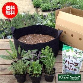 ハーブ 苗 セット 栽培キット 黒のフェルトプランター 届いたその日から栽培 ハーブ苗専門店