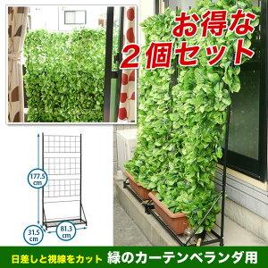 緑のカーテンベランダ用2個セット(1個/4才)