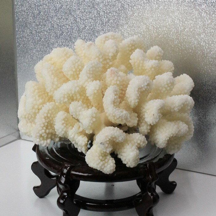 白珊瑚 置物|fossil Coral サンゴ コーラル さんご 化石 フォシル 珊瑚【置物 白珊瑚 インテリア 癒し 風水】メンズ レディース パワーストーン 天然石 海外直輸入価格 白珊瑚