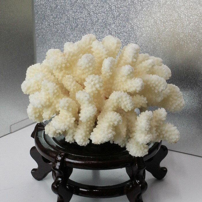 白珊瑚 置物|fossil Coral サンゴ コーラル さんご 化石 フォシル 珊瑚【置物 白珊瑚 インテリア 癒し】メンズ Men's レディース Ladies 限定 天然石 白珊瑚