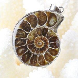 アンモナイト ペンダント|Ammonite 化石 Ammonoidea アンモン貝 マリエラ 菊石 fossil アンモナイト ネックレス Pendant Necklace ペンダント チャーム|メンズ レディース パワーストーン 天然石 海外