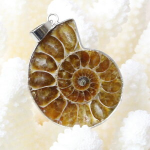 アンモナイト ペンダント|Ammonite 化石 アンモン貝 マリエラ 菊石 fossil アンモナイト ネックレス ペンダント チャーム Pendant Necklace 首輪|メンズ レディース パワーストーン 天然石 海外直輸