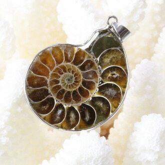 菊石吊墜|Ammonite菊石Ammonoidea化石ammon貝瑪麗埃拉菊石頭fossil人Men's女士Ladies天然石頭非常便宜的菊石