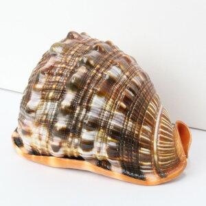 巻貝置物|巻貝巻き貝ほら貝貝殻【インテリア癒し置物】メンズMen'sレディースLadies天然石海外直輸入価格巻貝