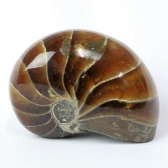 鸚鵡男孩化石|鸚鵡男孩鸚鵡貝菊石人分歧D功率斯通天然石頭海外直接進口價格鸚鵡男孩