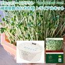 ブロッコリー スプラウト の種と栽培容器のセット オーガニック 有機種子 キッチンファーム かいわれ型 ブロッコリー…