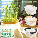 スプラウト 栽培容器 キッチンファーム かいわれ型 ブロッコリースプラウト 水耕栽培 有機種子 発芽豆 アルファルファ…
