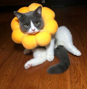 エリザベスカラー ひまわり型首輪 超可愛い 調整可能 猫用 犬用 傷舐め防止 ヘルスケア 術後ウェア ソフト 柔らかい 軽量 通気性 ネコ イヌ おもちゃ かわいい 向日葵 無地 ペット雑貨 安全