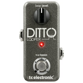 t.c.electronic 《tcエレクトロニック》DITTO LOOPER ※国内正規品 【あす楽対応】