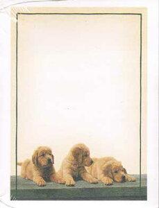 LANG ポストイット Post it ゴールデンレトリバー 50シート 3M 1011 ポスト・イット スリーエム 付箋 ふせん 輸入 文具 文房具 アメリカ 子犬 GOLDEN RETRIEVER PUPPIES PRESS NOTES かわいい 犬 DOG グッズ 雑貨