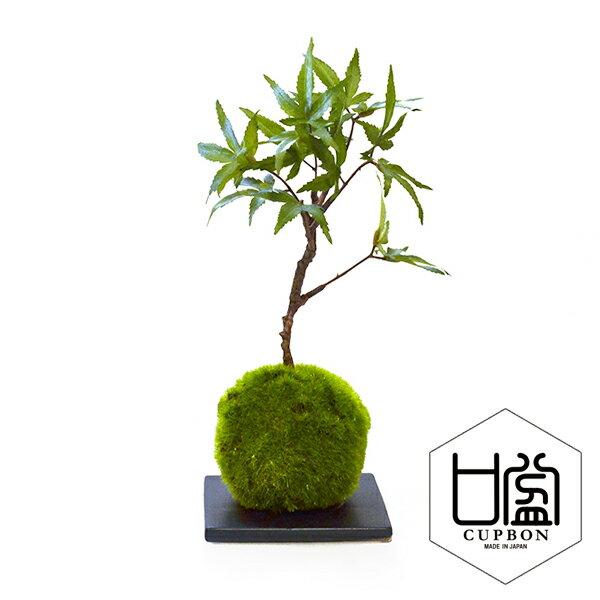 盆栽 フェイクグリーン 人工観葉植物 造花 モミジ 苔玉 黒皿 CUPBON | もみじ 観葉植物 人工 リアル フェイク グリーン イミテーション インテリア インテリアグリーン おすすめ おしゃれ 和室 和風 和モダン 枯れない 引っ越し祝い ギフト プレゼント 紅葉 bonsai