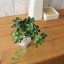 フェイクグリーン 人工観葉植物 造花 ミニ シュガーバイン ウォーターキューブ GREENPARK | 観葉植物 リアル フェイク…