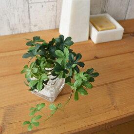 フェイクグリーン 人工観葉植物 造花 ミニ シュガーバイン ウォーターキューブ GREENPARK   観葉植物 リアル フェイク 人工 ギフト プレゼント アーティフィシャルグリーン インテリア おしゃれ イミテーション お祝い 小型 小さい おすすめ インテリアグリーン