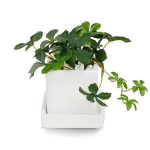 フェイクグリーン 人工観葉植物 造花 ミニ シュガーバイン 白玉石 エコストーン 皿付ミニベース GREENPARK   小さい 小型 おしゃれ イミテーション インテリアグリーン ギフト PRGR-0998