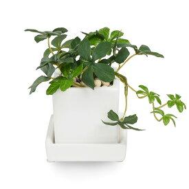 フェイクグリーン 人工観葉植物 造花 ミニ シュガーバイン エコストーン 皿付ミニベース GREENPARK   観葉植物 フェイク 小型 ミニサイズ イミテーショングリーン アーティフィシャルグリーン おしゃれ インテリア 小さい イミテーション インテリアグリーン ギフト