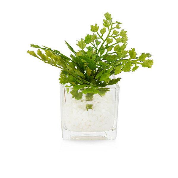 フェイクグリーン 人工観葉植物 造花 ミニ アジアンタム ウォーターキューブ GREENPARK | 観葉植物 フェイク グリーン 小型 ミニサイズ イミテーショングリーン アーティフィシャルグリーン おしゃれ インテリア 小さい イミテーション インテリアグリーン ギフト