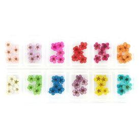 ドライフラワー 上質 押し花 こでまり 60枚 ネイル パーツ レジン 封入 新ケース入 12色×各5枚