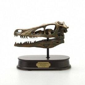 【クーポンあり】【送料無料】【あす楽】玩具 恐竜 フィギュア ダイナソー ヴェロキラプトル 化石 模型 インテリア ギフト DINOSAUR SKULL&JAWS MODEL 恐竜 ヴェロキラプトル スカル&ジョーズモデル FD660