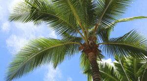 【SV925リバーシブルホエールテールネックレス】ハワイアンジュエリー/Puaally/手彫り/チェーン付/ペア/メンズレディース/リバーシブル