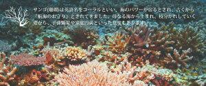ピアスレディース【K14ダイヤモンドサンゴピアス】ハワイアンジュエリーイエローゴールド珊瑚サンゴcoralダイヤモンドDiaK1414金ゴールド